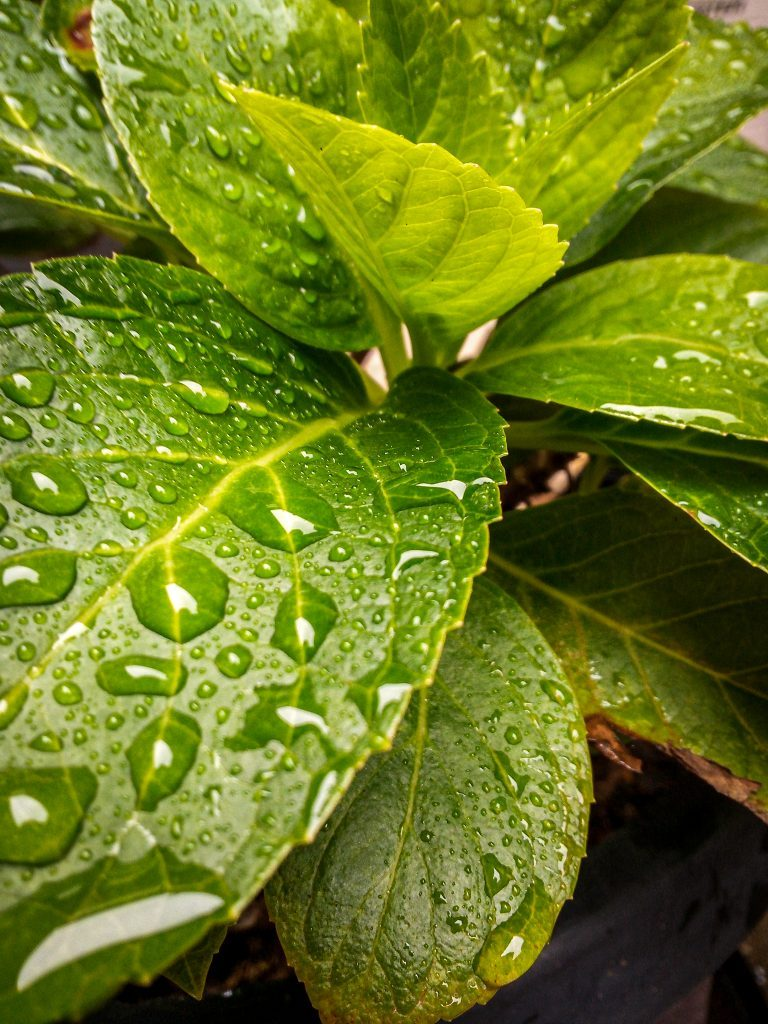 Raindrop on Leaf by Nissin
