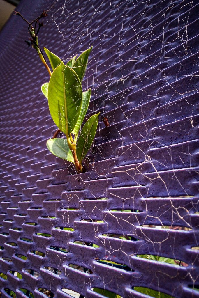 Spider`s Home by Nissin